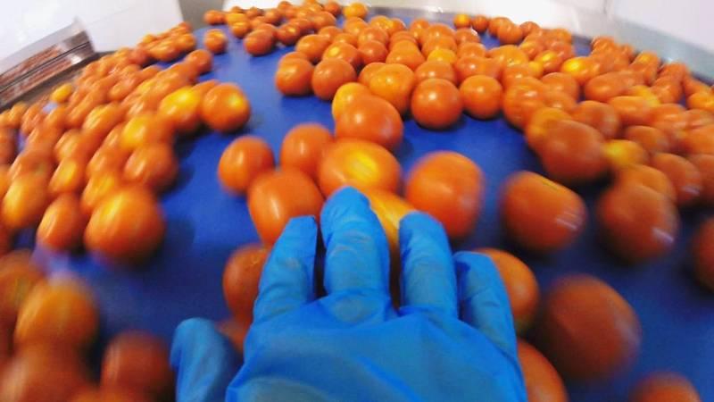 Los ingredientes son: tomates, pepinos, pimientos rojos y verdes
