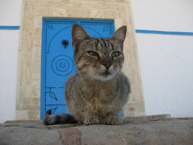 Un gato en Kairouan.