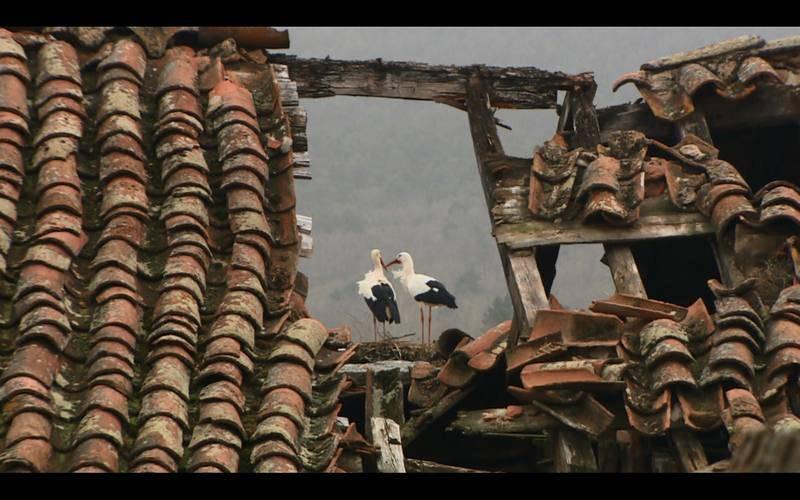 Cigüeñas en su nido en el casco urbano de El Espinar, Segovia