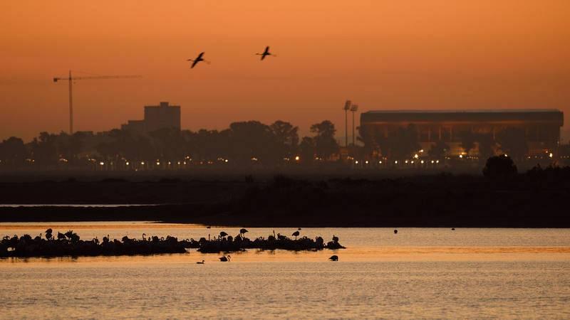 El amanecer en las marismas: Proyecto europeo 'Coro del amanecer'