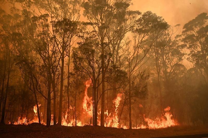 Las llamas devoran un bosque en la ciudad de Moruya