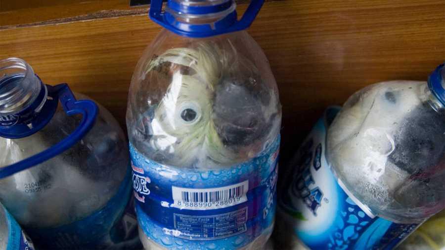 Imagen facilitada por la policía indonesia, que muestra a diferentes cacatúas aprisionadas en botellas de plástico.