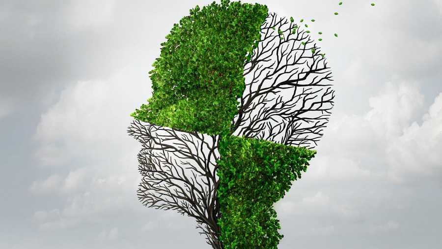 Árbol con forma de cabeza perdiendo las hojas