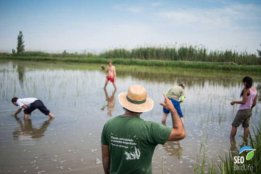 Voluntariado en el delta del Ebro
