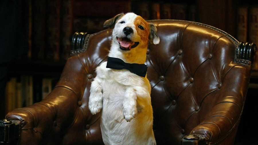 Pancho, el perro de La Primitiva