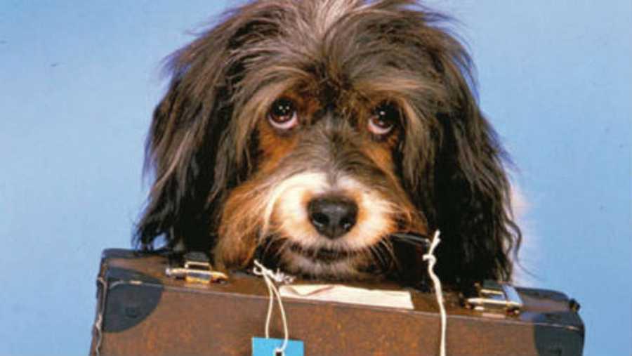 La perra Pippin, protagonista de la campaña de TVE 'Aprenda a ver la televisión'