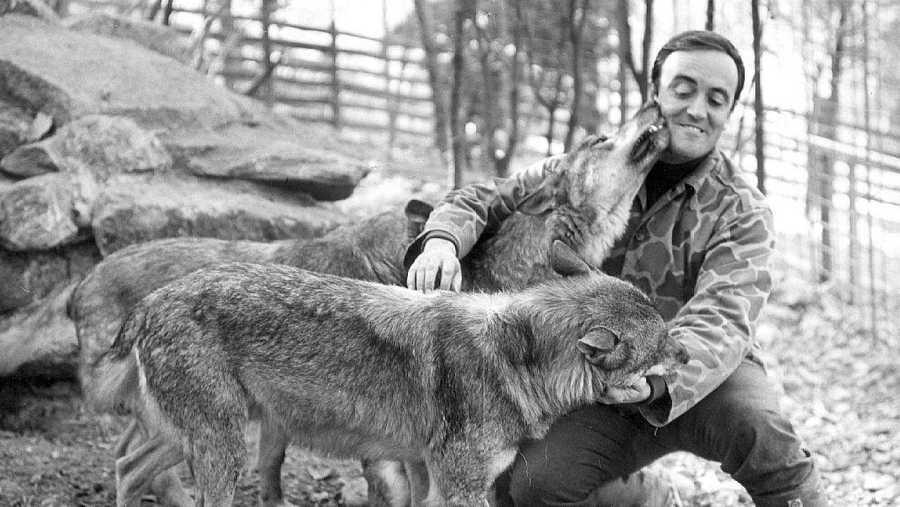 Félix Rodríguez de la Fuente, con sus amigos los lobos