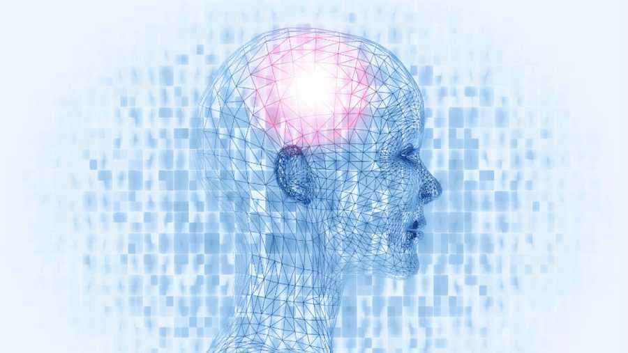 Cerebros matemáticos