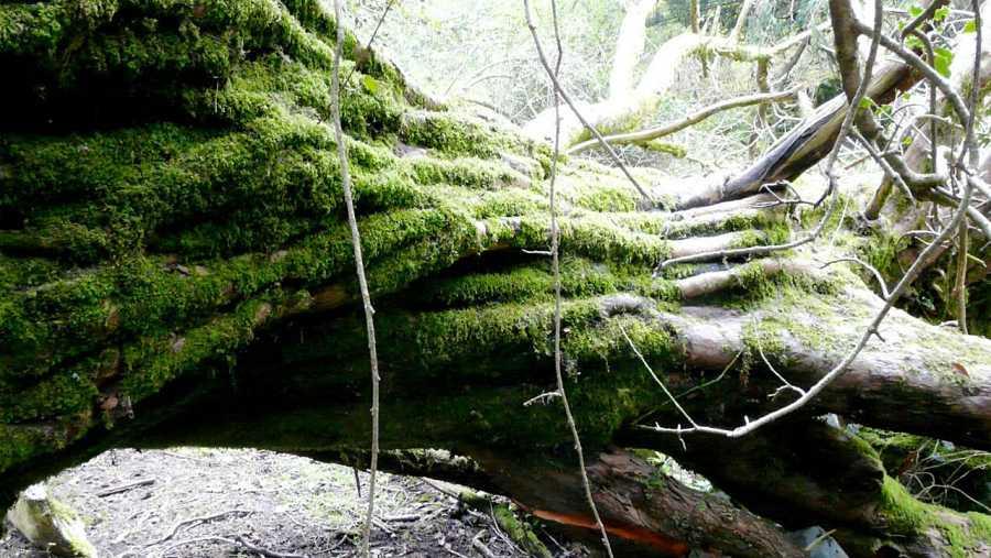 Hablamos de árboles singulares y monumentales