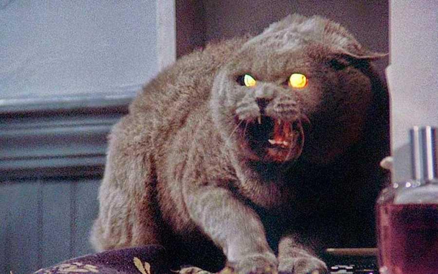 El simpático gatito de 'Cementerio de animales'