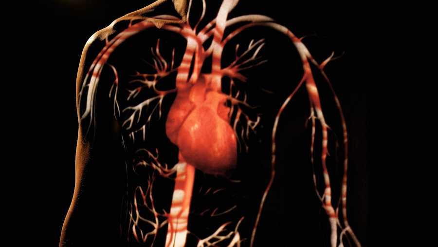 El corazón es el motor de nuestro cuerpo... ¿lo podremos fabricar?