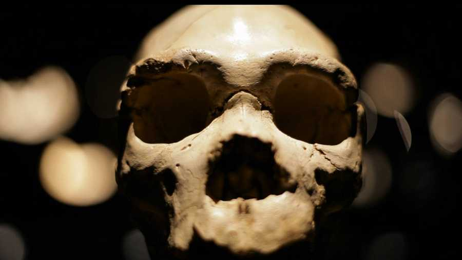 Restos del Homo Antecessor, hallado en Atapuerca