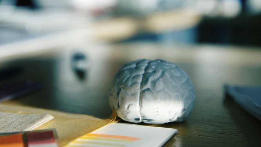 ¿Cómo funciona este enramado de 87.000 millones de neuronas que tenemos bajo nuestro cráneo?