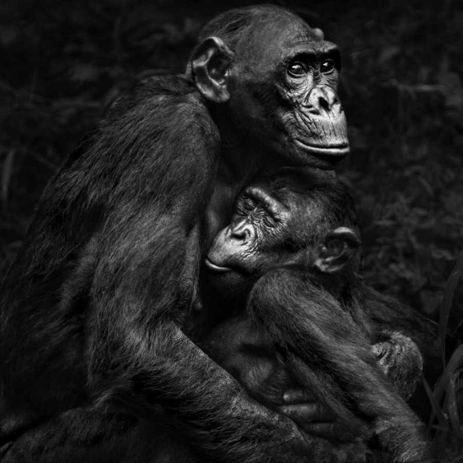 Durante una larga convalecencia, Isabel Muñoz se planteó la necesidad de fotografiar lo más básico, el origen del ser humano. De ahí surgió Álbum de familia, un trabajo sobre los primates que le llevó a recorrer distintos continentes y le hizo conoc