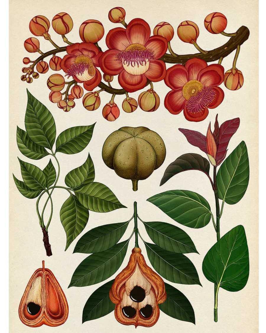 Página de 'Botanicum'