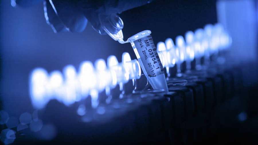Conocemos un modelo innovador de industria farmacéutica donde les sale más barato y versátil diseñar fármacos con gusanos en lugar de reactores químicos