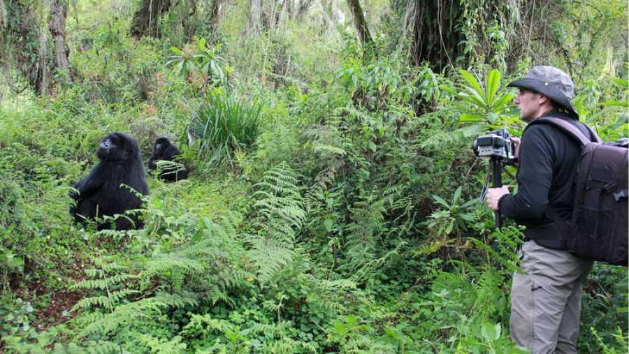 Jordi Galbany colabora con la Fundación Dian Fossey desde hace tres años y medio