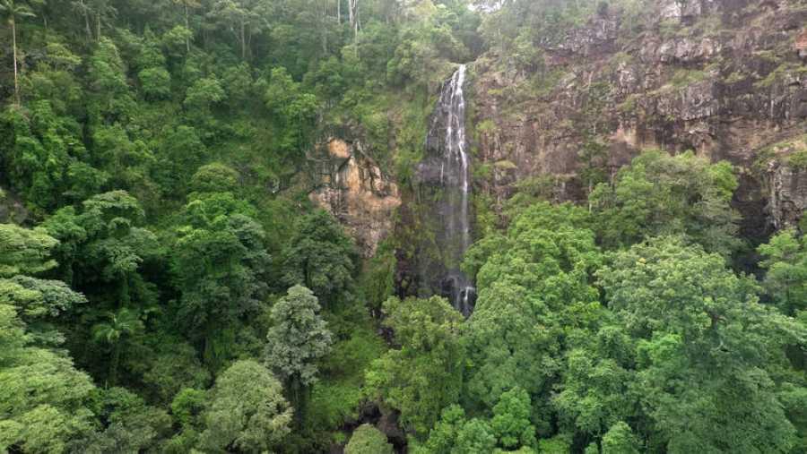La jungla tropical de Australia, una de las más antiguas del mundo