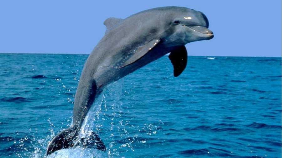 Delfines, los animales inteligentes