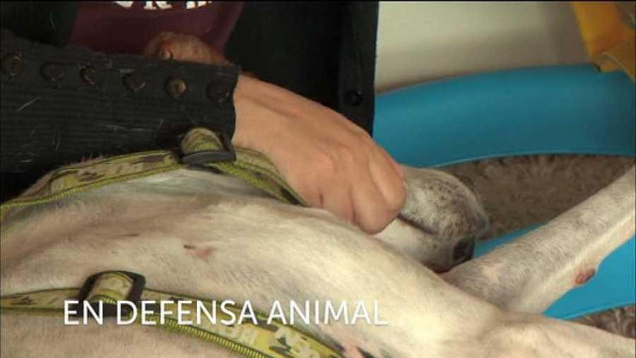 Contra el maltrato animal