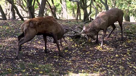 La fauna y la flora de la Selva de Irati protagonizan la primera entrega