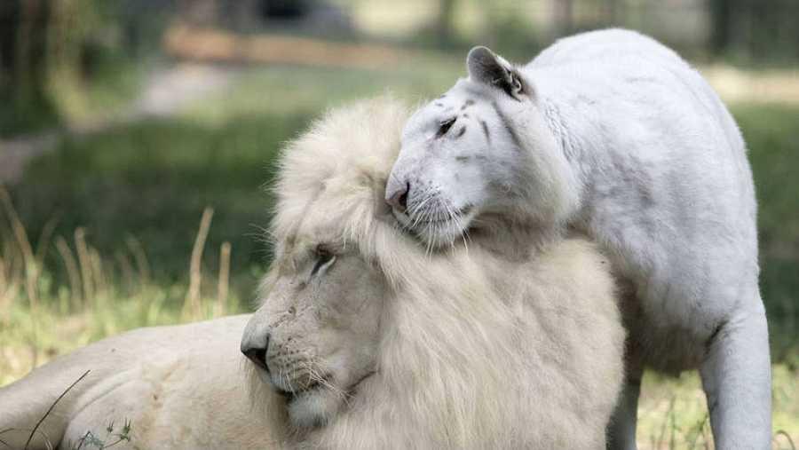 El albinismo en animales