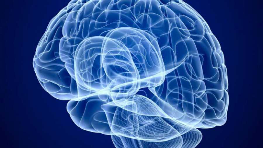 Cada hemisferio del cerebro tiene sus funciones