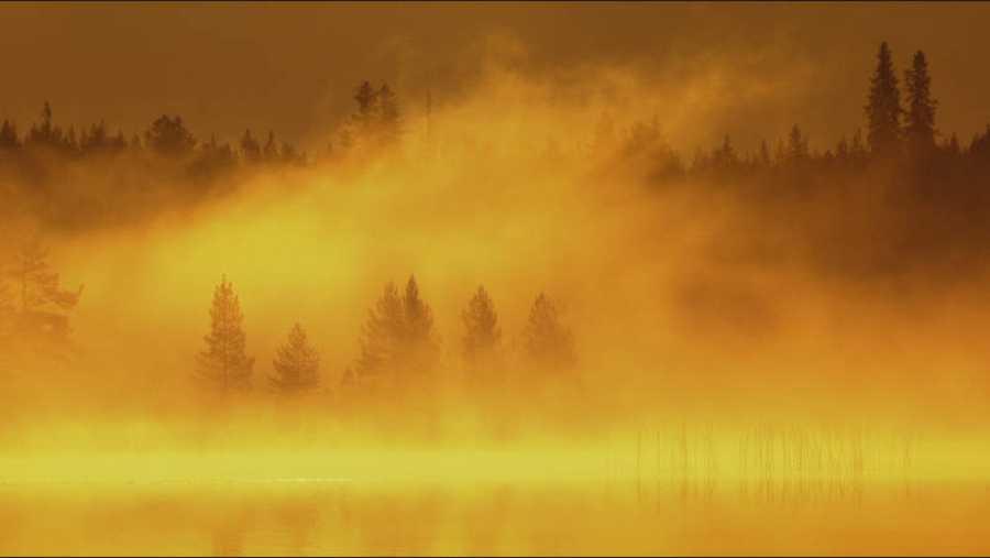 Escondidos en los bosques de Finlandia, Suecia y Noruega, muchos miles de osos viven aún en aquellas tierras.