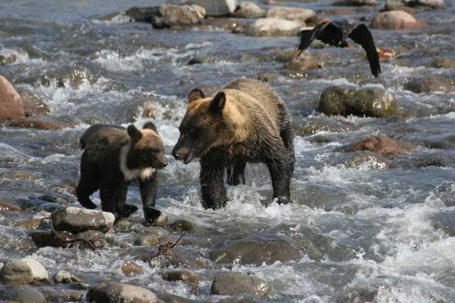 Cruzar un rio caudaloso es también una aventura arriesgada