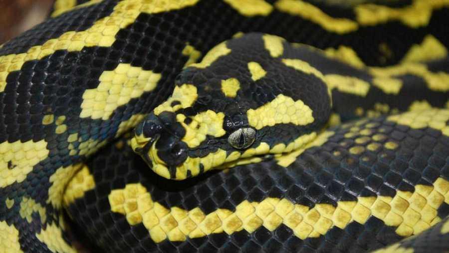 La herpetología estudia a los reptiles