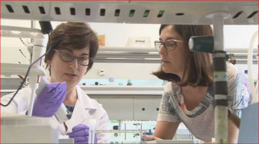 En el IQAC investigan enfermedades  como la artritis reumatoide