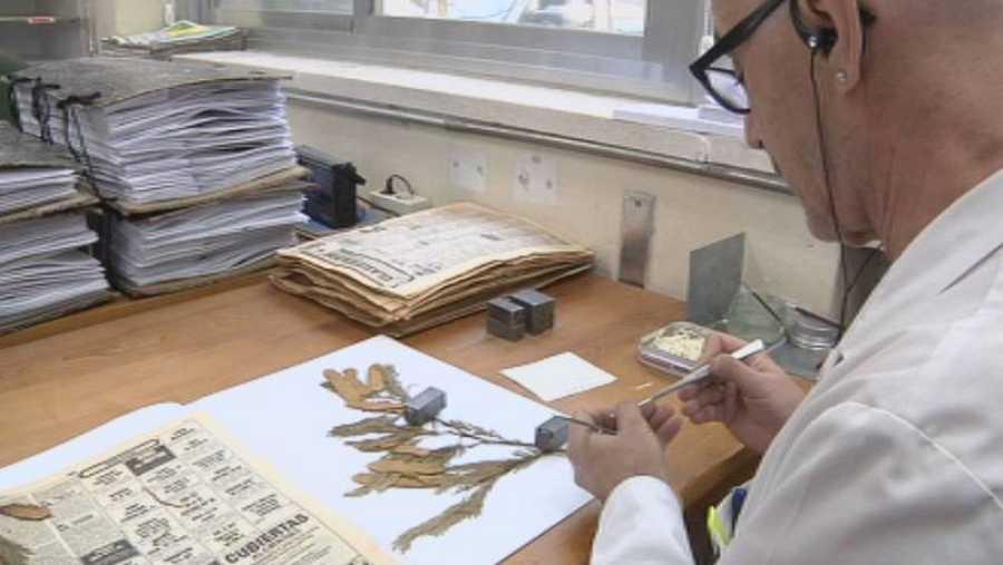 Proceso de digitalización de ejemplares del Herbario
