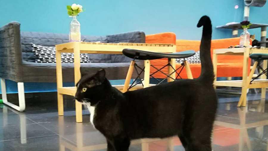 Uno de los gatos acogidos en Polineko