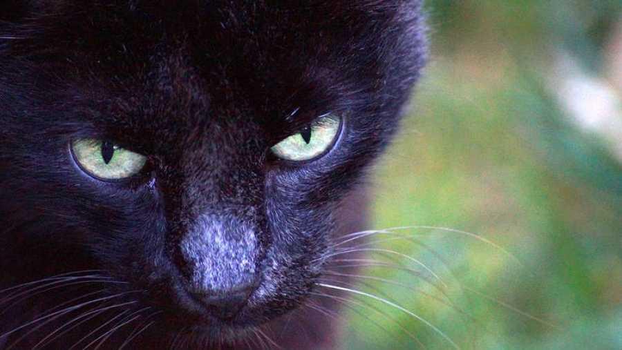 Más de 33.000 gatos son abandonados anualmente en España