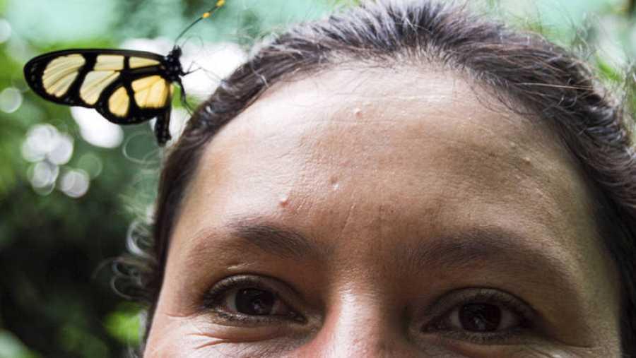 Una mariposa posada sobre la cabeza de María Bustamante, gestora del mariposario de Palestina