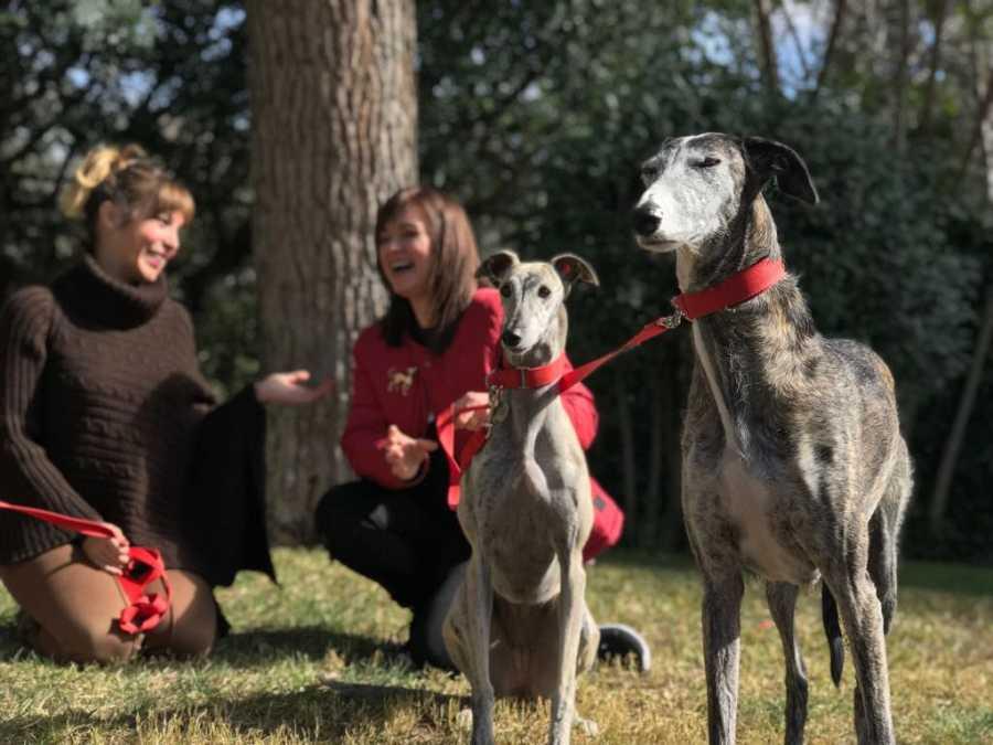 El programa busca la mascota més divertida, més sorprenent, més tendra de Catalunya