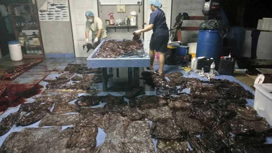 Bolsas extraídas del estómago de la ballena fallecida en Tailandia