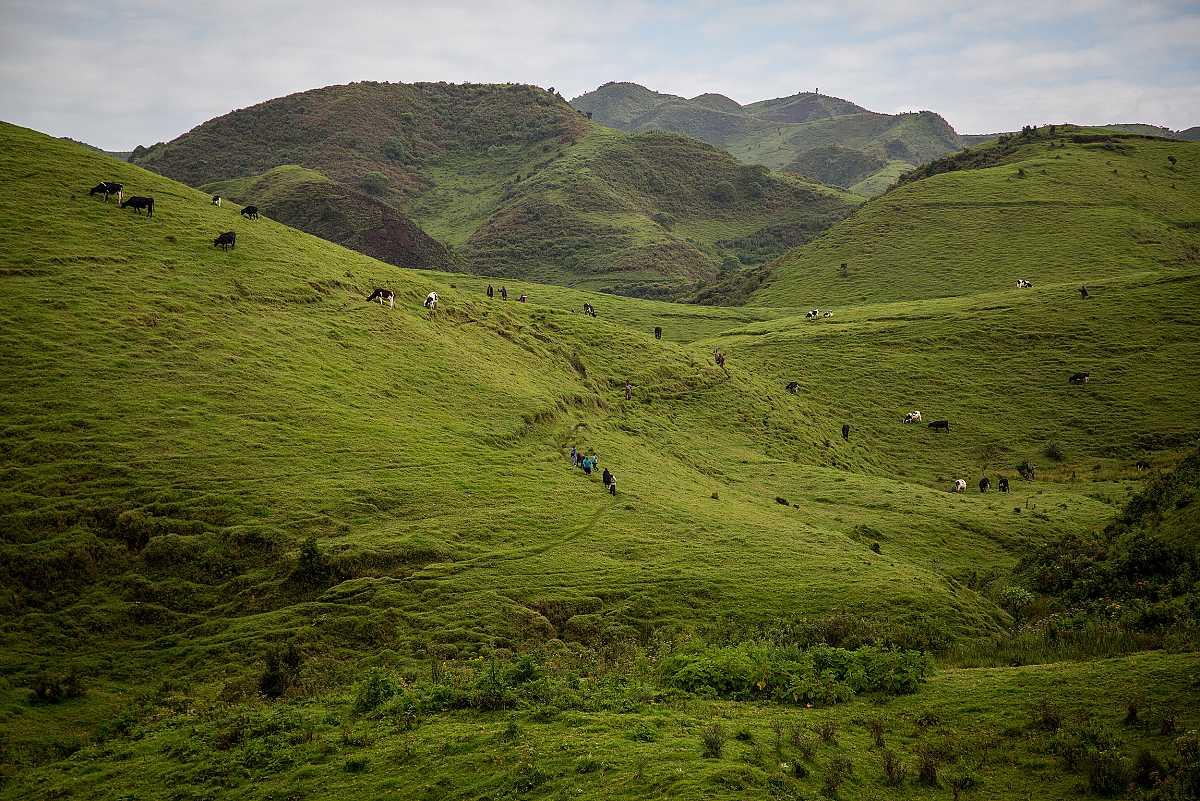 Una hilera de personas caminando por un sendero entre la frondosa vegetación.