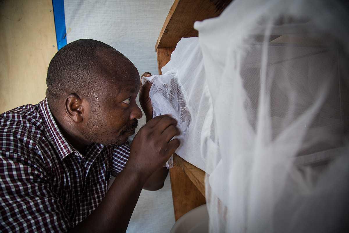 Severin Ndo mira por el hueco de una mosquitera la evolución de los mosquitos de la malaria.