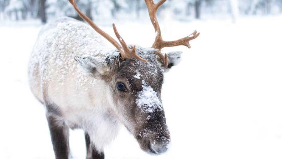 Los análisis realizados revelan que este mamífero se adapta difícilmente al cambio climático.