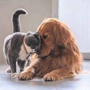 Los gatos también necesitan hogares de acogida como los perros.