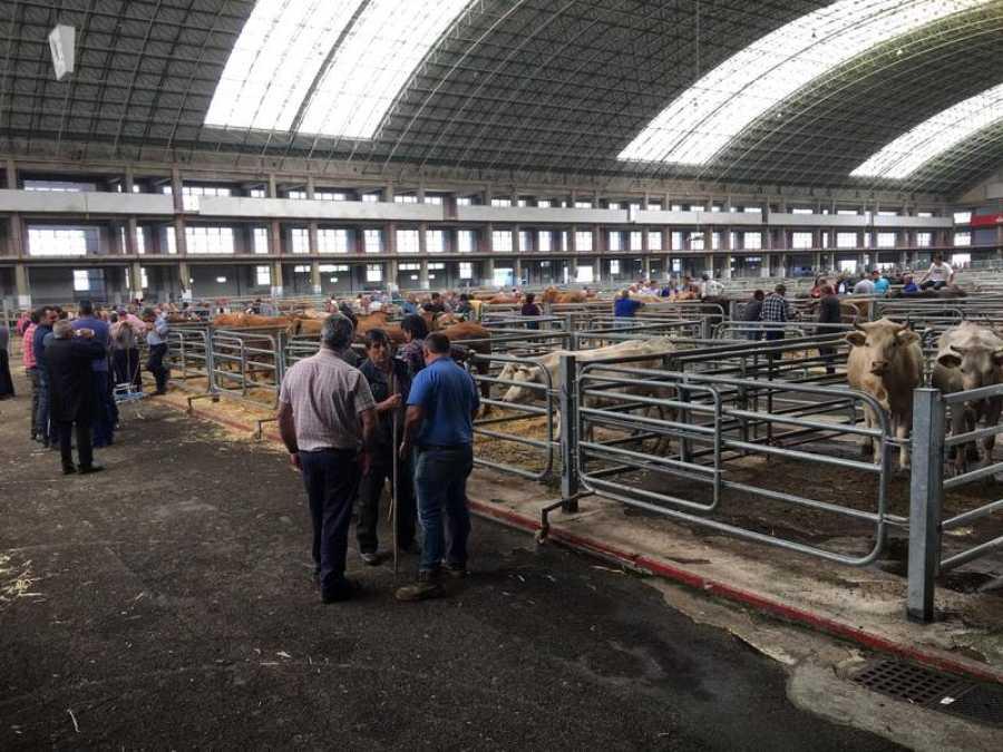 Un grupo de ganaderos, en el Mercado Nacional de Ganados de Torrelavega
