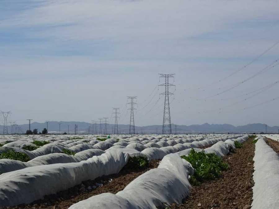 La mayor parte de la población extranjera de Torre-Pacheco trabaja en el campo