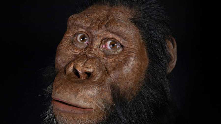 Reconstrucción del aspecto de un Australopithecus Anamensis