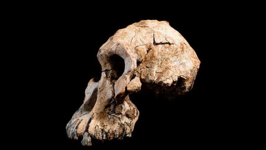 Australopithecus Afarensis y fue detectado en1974en la misma región que MRD