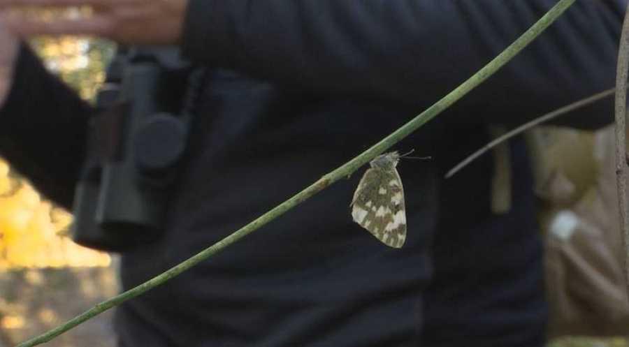 Truchas y mariposas para predecir el futuro de las especies