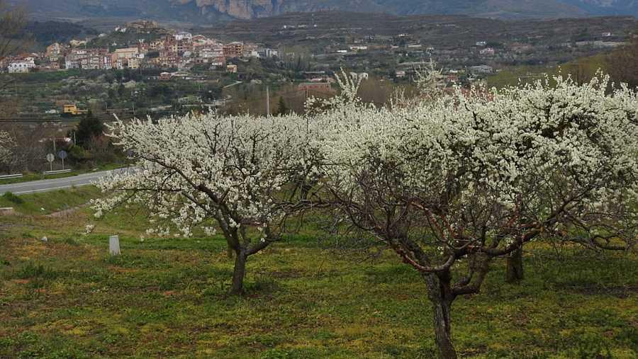 Ciruelos de Nalda, La Rioja