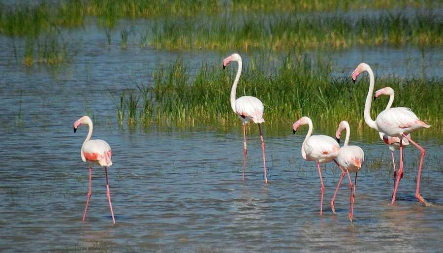Parque Nacional Doñana, Huelva