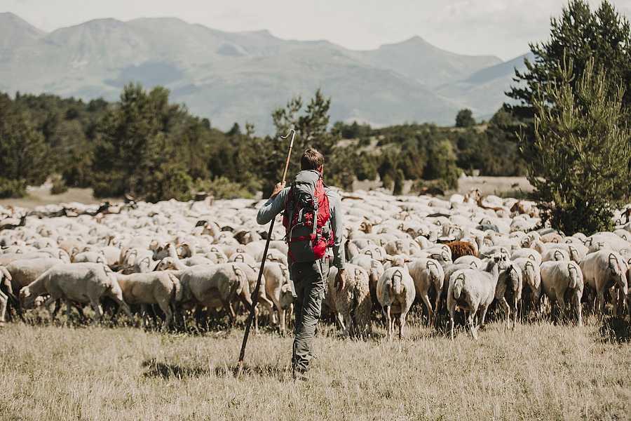 El joven pastor Zacarías, conducirá el programa mientras lleva a sus ovejas por el Pirineo aragonés