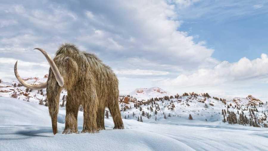 Una infografía de un mamut caminando por un paisaje nevado